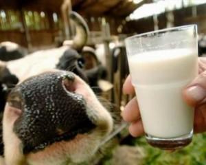 молоко и другие молочные продукты
