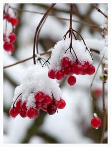 Зимняя веткотерапия