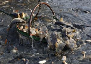 паразиты в речной рыбе